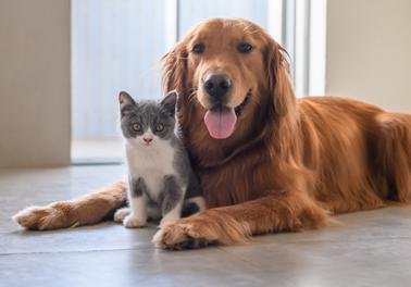 COVID-19 : les bons gestes à adopter avec vos animaux de compagnie